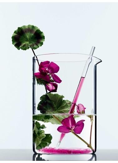 L'Oréal Paris Botanicals Fresh Care Sardunya Parlaklık İksiri Bakım Kremi 200 Ml Renksiz